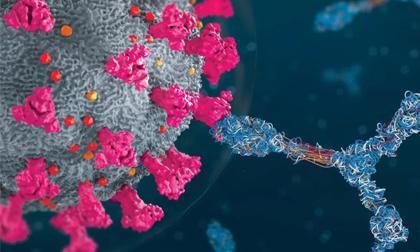 Phát hiện một số người có miễn dịch 'siêu nhân' chống lại Covid-19