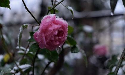 Chùm ảnh: Ngắm nhìn thị trấn Sa Pa chìm trong tuyết trắng