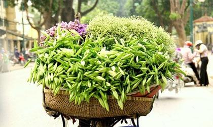 Hoa loa kèn trắng tinh khôi mang tháng tư về phố