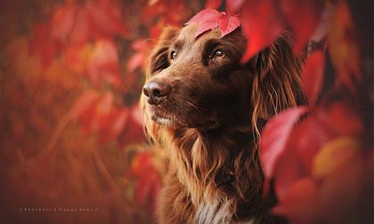 'Câu chuyện mùa thu của những chú chó' khiến cư dân mạng thổn thức