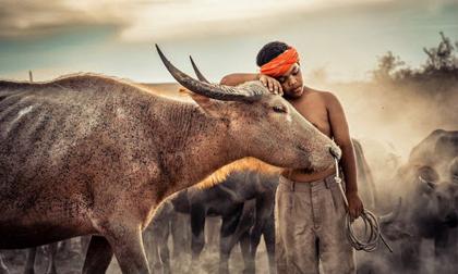 Ảnh đẹp lặng người của cuộc thi ảnh lớn nhất thế giới