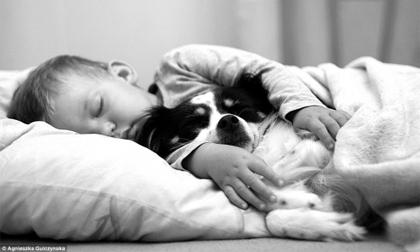 Cậu bé 2 tuổi và tình bạn đặc biệt với 3 chú chó