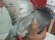 Kết luận chính thức về chim bồ câu mang ký tự 'lạ'