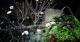 Vườn mai trắng cho thuê độc đáo ở Hà Nội