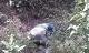 Phát hiện thi thể nữ sinh bị phân hủy trong rừng