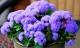 4 loại hoa cắm trong nhà giúp đuổi muỗi