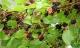 5 loại cây xui xẻo không trồng trong vườn nhà