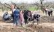 Dân kéo nhau lật tung đất lên để tìm tiền cổ