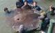 Những 'thủy quái' khổng lồ trên thế giới từng bị 'tóm gọn'