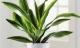 12 loại cây trồng có tác dụng hút khí độc trong nhà