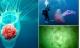 Những loài sứa tuyệt đẹp nhưng gây chết người