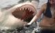 Những vụ cá mập tấn công người đẫm máu nhất lịch sử