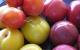 Ăn mận mùa hè: Ăn đúng mới tránh bệnh sỏi thận