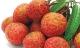 7 mẹo ăn vải thiều để không bị nóng và nổi mụn