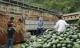 Đầu ra cho nông sản: Bộ Công Thương chỉ có giải pháp… tinh thần?