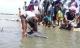 Cá heo dài 1,6 m mắc cạn trên bãi biển Vũng Tàu