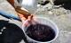 Nước giếng chuyển màu tím đen khi pha trà