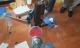 Đột kích lò điều chế ma túy ngoài đê sông Hồng