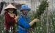 Hoa cúc tăng giá mạnh, nông dân Đà Lạt trúng lớn