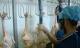 Gà Mỹ nhập vào Việt Nam: Người chăn nuôi điêu đứng
