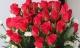 6 loại hoa nên tặng thầy cô giáo trong ngày 20/11