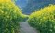 Những 'mùa thu vàng' đẹp mê mẩn ở ngay Việt Nam mình chứ chẳng đâu xa!
