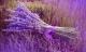 12 cung hoàng đạo trồng hoa gì để được may mắn, hạnh phúc