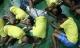 Gần 60.000 người nghiện ở Philippines đầu thú vì sợ bị giết