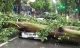 HN: Gió đang giật cực lớn, cây đổ ngổn ngang do bão số 1