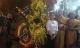 Tổ chức tang lễ Bí thư và Chủ tịch HĐND Yên Bái theo nghi thức cấp cao