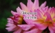 Tử vi thứ Năm (1/9): Nhân Mã và người thân có mâu thuẫn