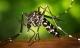 Thêm hai trường hợp mắc Zika ở TP.HCM và Bình Dương