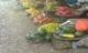 Những loại trái cây mùa Hè nguy cơ 'ngậm' nhiều hóa chất độc hại