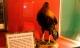Chú gà không đầu vẫn sống 18 tháng: câu chuyện thật mà đến tận giờ vẫn chẳng mấy người tin