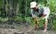 Câu chuyện ly kỳ về lão nông 70 tuổi 20 năm vào rừng đước nuôi tôm