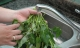 Thói quen chết người khi luộc rau, nấu canh không khác nào đang tự hạ độc cả nhà