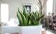 Những loại cây trồng mang lại phong thủy tốt cho ngôi nhà chung cư của bạn