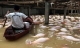 Sững sờ nhìn trại lợn gần 4.000 con bị xóa xổ vì nước lũ