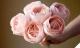 Những bông hoa đắt nhất TG - món quà 'trong mơ' của chị em ngày 20-10