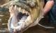 Bạn sẽ phải suy nghĩ lại việc bước chân xuống nước sau khi thấy những con thủy quái ăn thịt người này