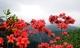 Đi khắp đất nước, ngắm các loại hoa đẹp nở khắp nơi