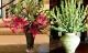 Loại hoa cấm cúng trên bàn thờ sẽ mất hết tài lộc, gia đình gặp toàn vận xui, làm ăn thất bát