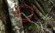 Câu chuyện tâm linh trong hành trình đi tìm phượt thủ mất tích cung Tà Năng – Phan Dũng