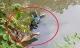 Hoảng hốt phát hiện thi thể nam thanh niên nổi bên dòng suối ở Thanh Hóa