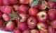 Cẩn trọng 6 loại quả Trung Quốc độc hại được nhập về nhiều nhất: Đẹp long lanh, giá rẻ hơn rau