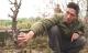 Vụ hàng trăm gốc đào Tết bị phá hoại: Một chủ vườn tự sát tử vong
