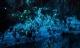 Hang động kỳ ảo nhất New Zealand khiến du khách trố mắt