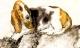 Tháng 3 Canh Tý: Những con giáp gặp họa tiểu nhân, cẩn thận không ốm đau, mất tiền bạc