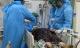 Bệnh nhân 499 tử vong vì ung thư đường máu ác tính, viêm phổi nặng và nhiễm COVID-19