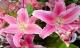 Thắp hương bằng hoa ly là đại kỵ, đây mới là 5 loại hoa nên bày lên bàn thờ để gia chủ may mắn